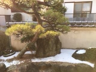 雪が残っています.jpg